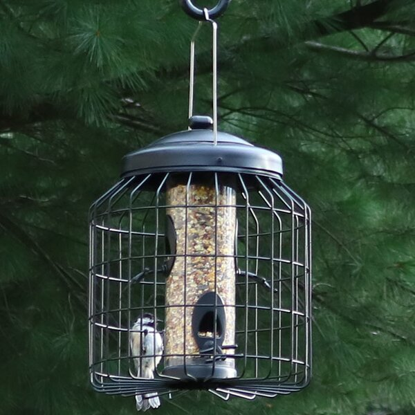 4-Peg Squirrel-Proof Wild Tube Bird Feeder by Wild