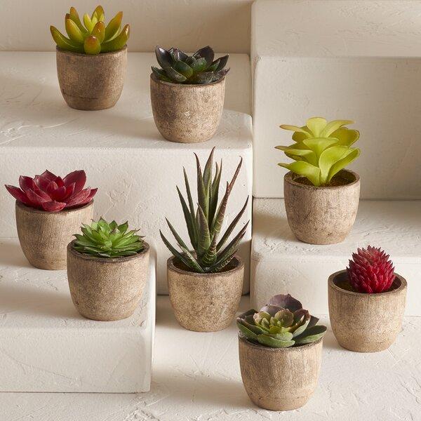 8 Piece Faux Succulent Desktop Plant in Pot Set by Langley Street