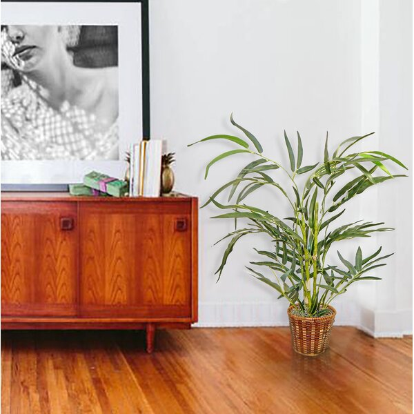 Bamboo Plant in Basket by Bay Isle Home