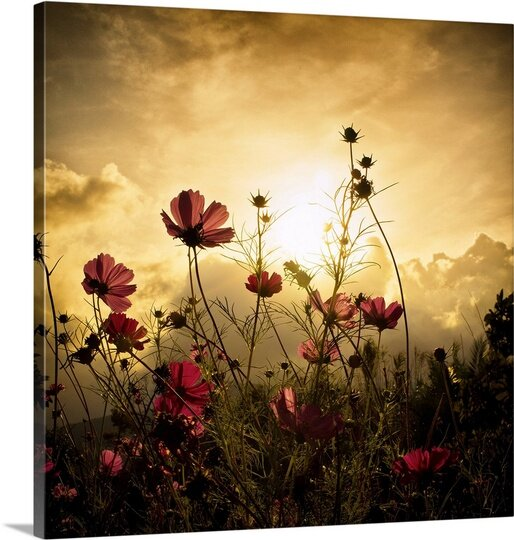 Watching the Sun by Christian Marcel Photographic Print on Canvas by Canvas On Demand
