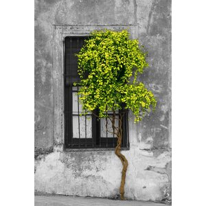 'Tree in Front of Window' Photographic Print on Wrapped Canvas by Ebern Designs