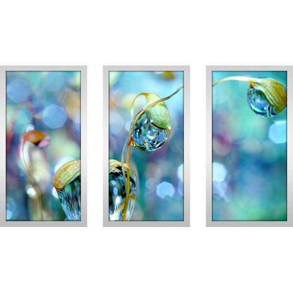 Rainbow Moss Drops by Sharon Johnstone 3 Piece Framed Photographic Print Set by Picture Perfect International