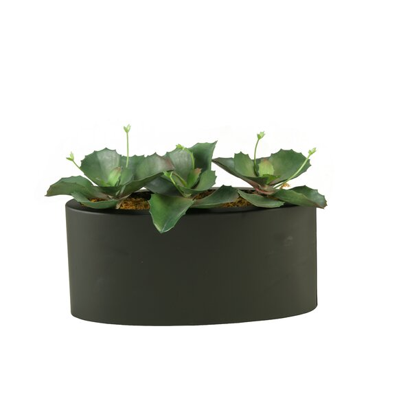Wild Succulents Plant in Planter by Wrought Studio