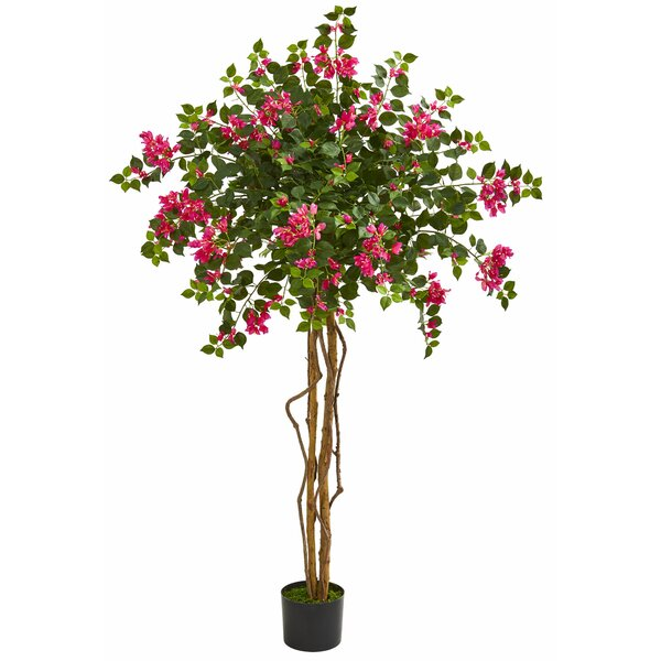 Bougainvillea Floor Foliage Tree in Planter by Charlton Home