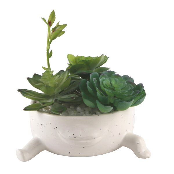 Spanish Lips Face Succulent Plant in Pot by Bungalow Rose