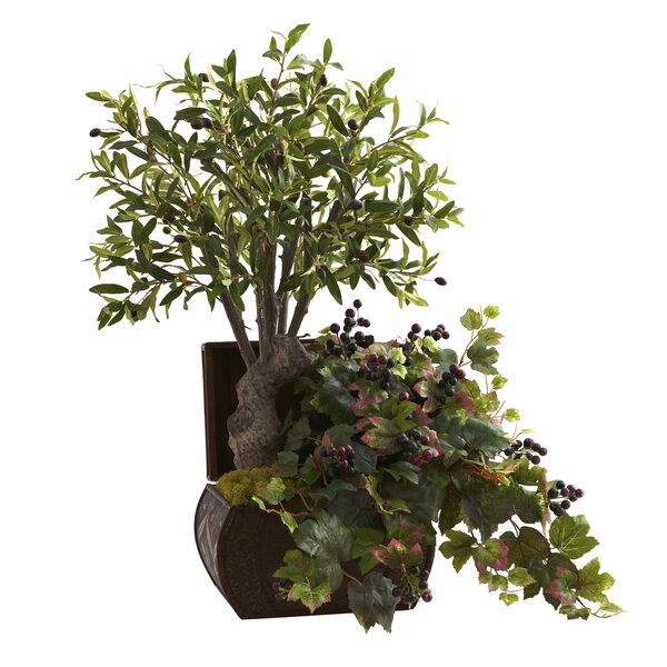 Olive Tree in Planter by Red Barrel Studio