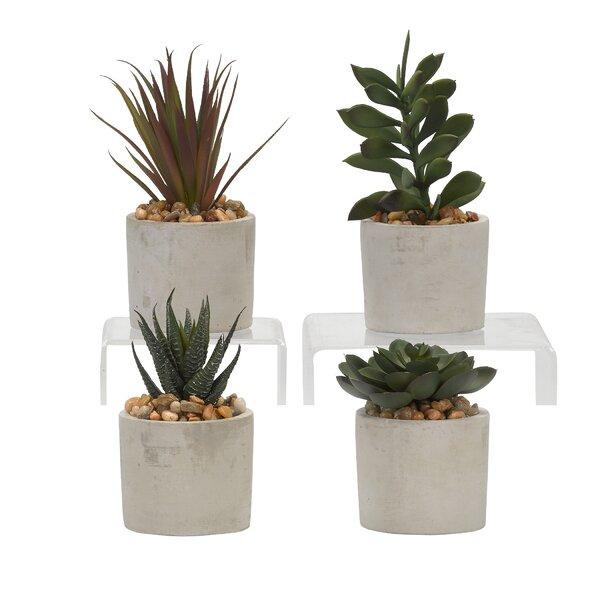 4 Piece Assorted Succulent Desktop Plant in Pot Set by Gracie Oaks