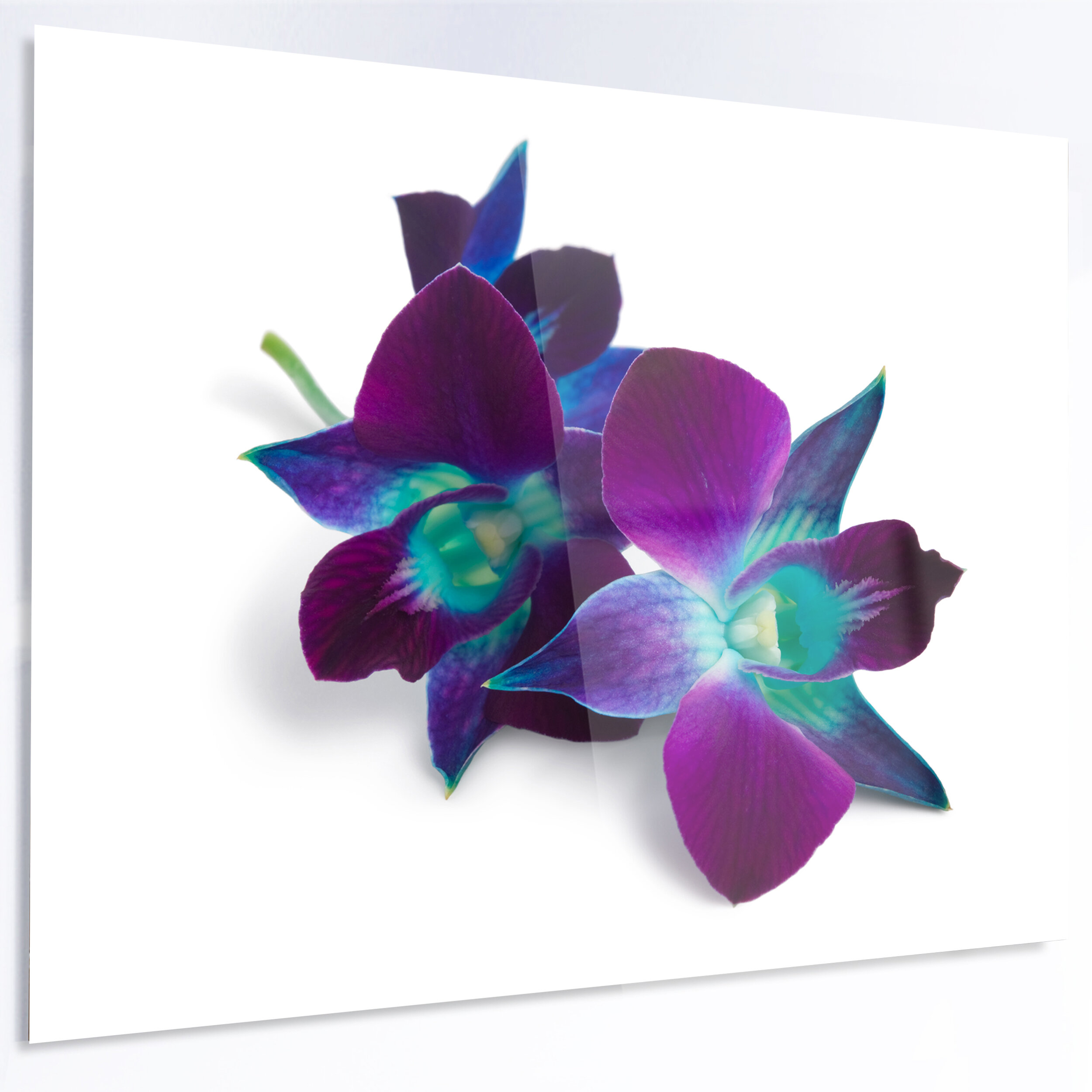 Designart Deep Purple Orchid Flowers On White Graphic Art Print On