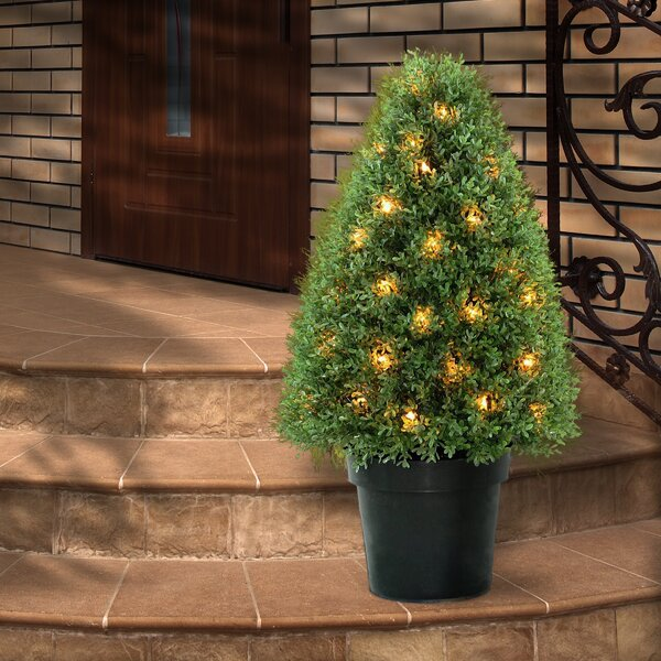 Pre-Lit Boxwood Round Tapered Topiary in Pot by National Tree Co.