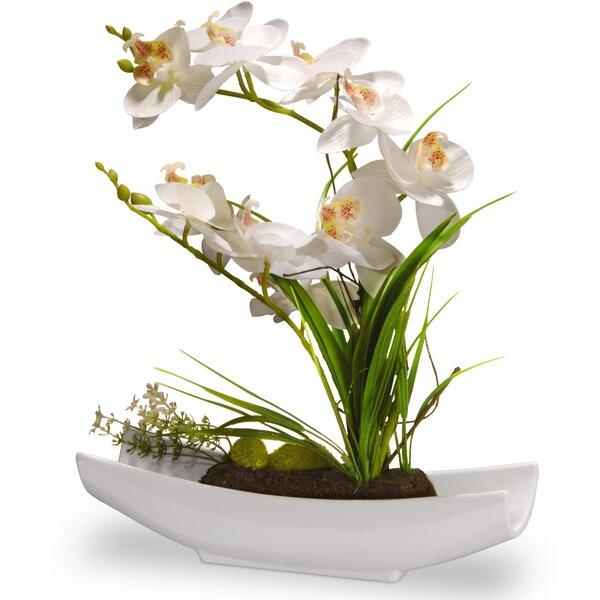 Orchid Floral Arrangement in Planter by Orren Ellis