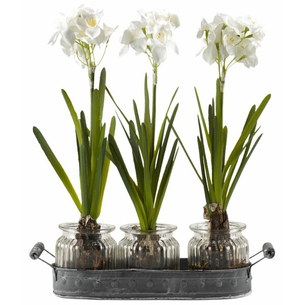 Paperwhite Bulbs in Glass Jars Oval Metal Tray Set (Set of 3) by Gracie Oaks