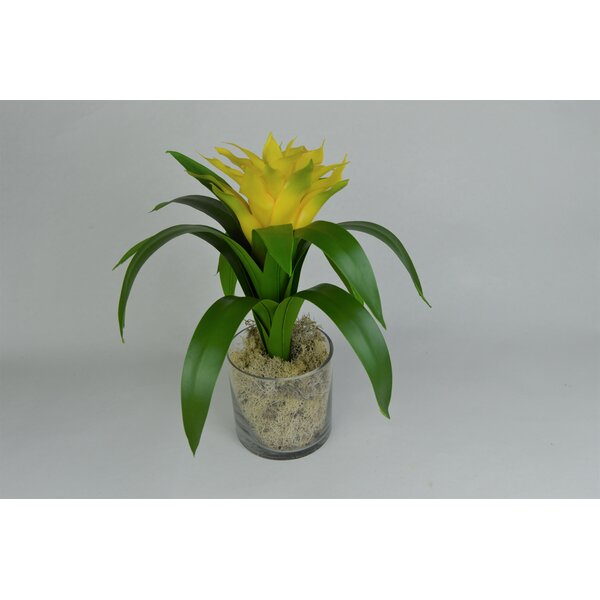 Bromeliad Flower in Glass Vase by T&C Floral Company