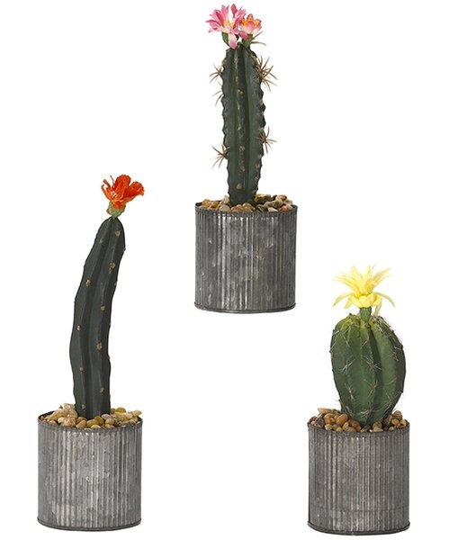 3 Piece Assorted Cactus Floor Plant in Planter by Bungalow Rose