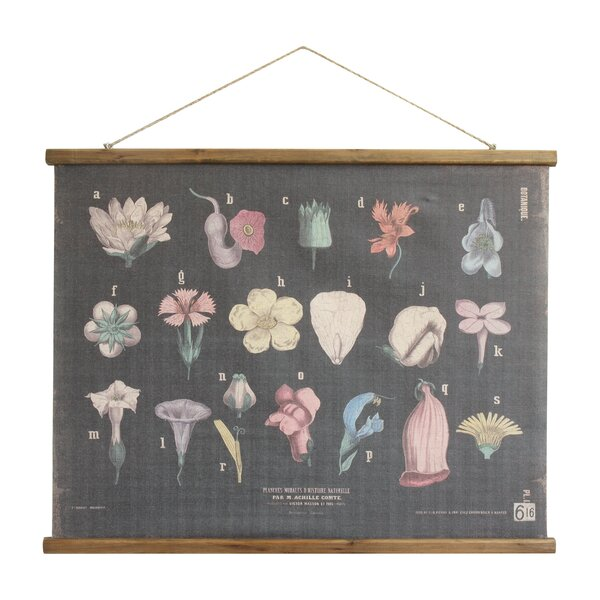 Hohl Scientific Botanical Linen and Wood Scroll Wall Hanging by Williston Forge