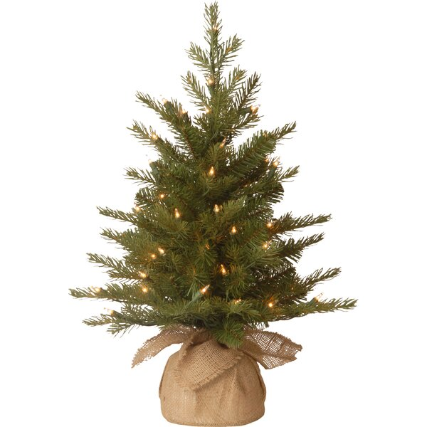 Nordic Pre-Lit Feel Real Spruce Small Tree by The Holiday Aisle