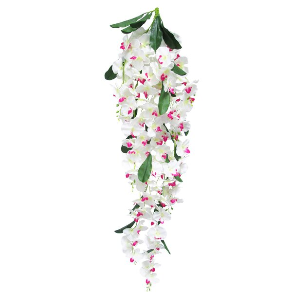 Hanging Phalaenopsis Stem by House of Hampton