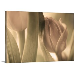 'Tulips' by Allan Wallberg Photographic Print on Canvas by Great Big Canvas
