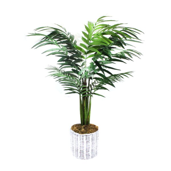 Palm Tree in Basket by Dalmarko Designs