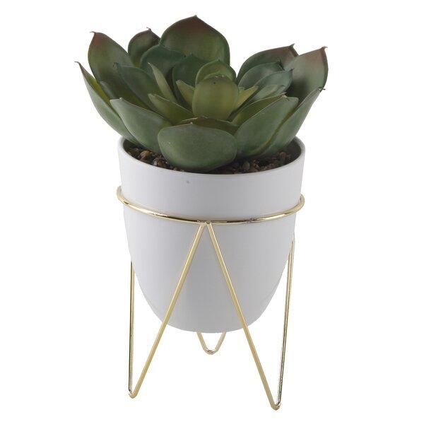Desktop Succulent Plant in Pot by George Oliver