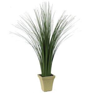 tall grass in pot