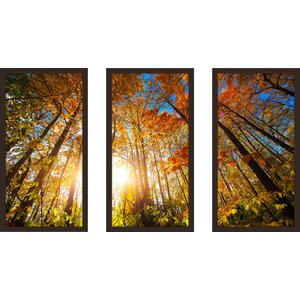 Autumn Aura 3 Piece Framed Photographic Print Set by Picture Perfect International