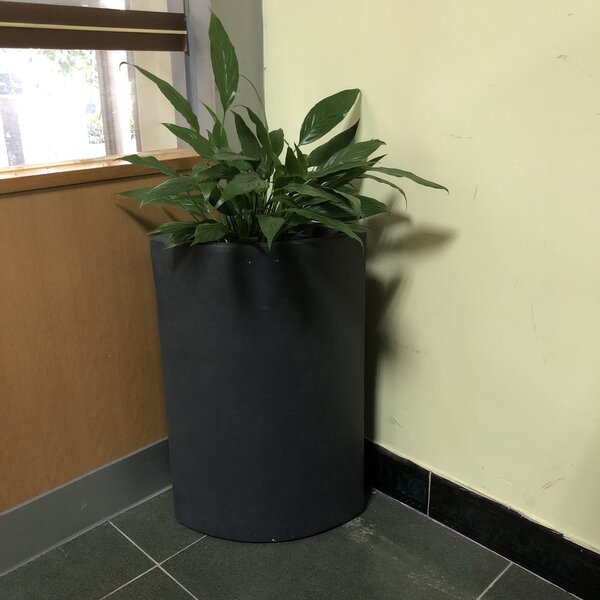 Gallegos Tall Corner Pot Planter by Williston Forge