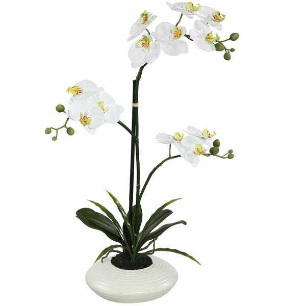 Potted Orchid Flowers in Pot by Mercer41