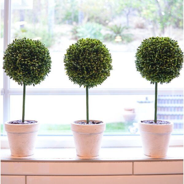 Faux Preserved Boxwood Floor Topiary in Pot (Set of 3) by Ophelia & Co.