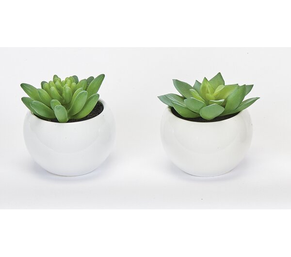 2 Piece Succulent Desktop Plant in Pot Set (Set of 2) by Bungalow Rose