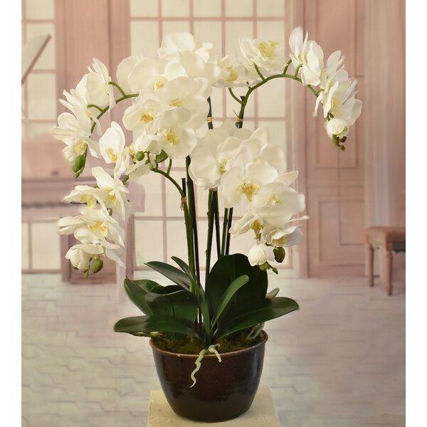 Phalaenopsis Silk Orchid Floral Arrangement in Pot by Rosdorf Park