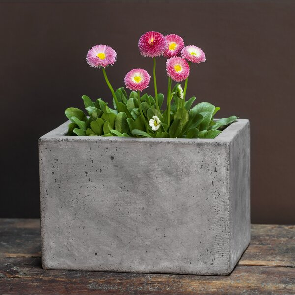 Belevy Geo Fiber Cement Planter Box (Set of 4) by 17 Stories