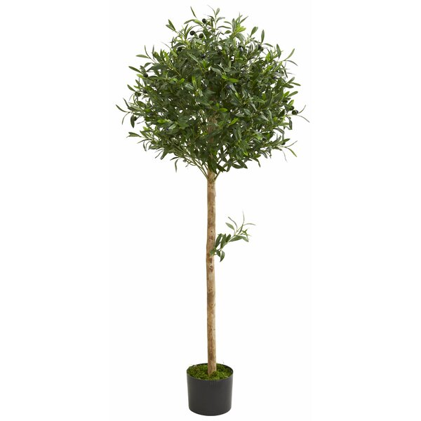 Olive Tree Topiary in Planter by Fleur De Lis Living