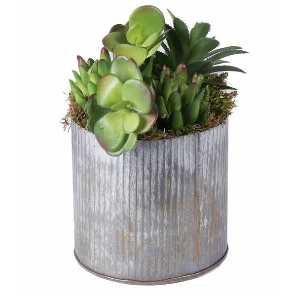 Succulents Plant in Pot by Mercury Row