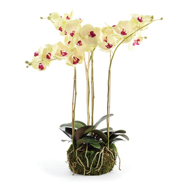 Drop-in Orchids by Bayou Breeze
