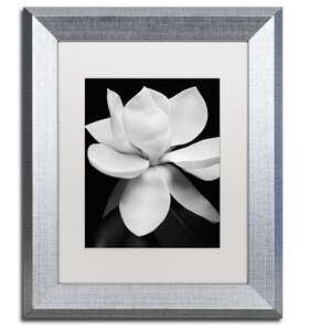 Magnolia by Michael Harrison Framed Photographic Print by Trademark Fine Art