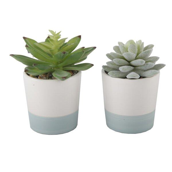 2 Piece Desktop Succulent Plant Set by Wrought Studio