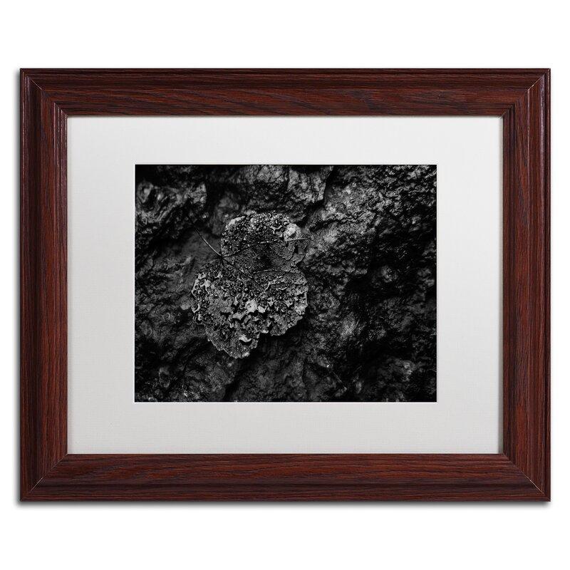 Trademark Art \'Pearls of Nature\' Framed Photographic Print | Wayfair