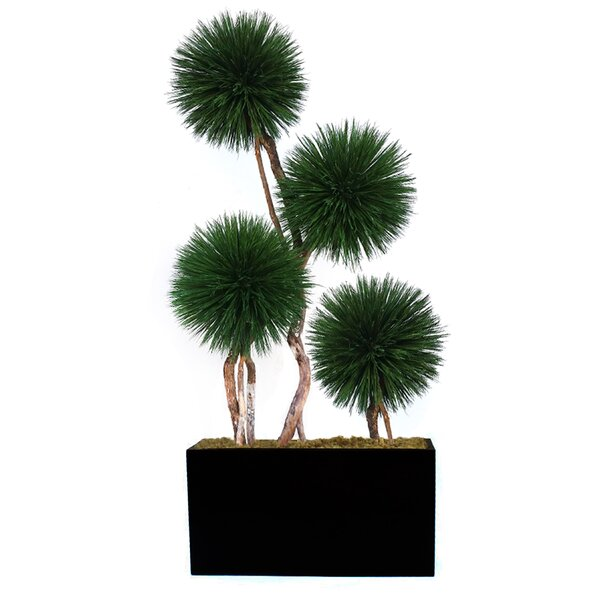 Exclusive Dalmarko Topiary in Metal Planter by Bayou Breeze