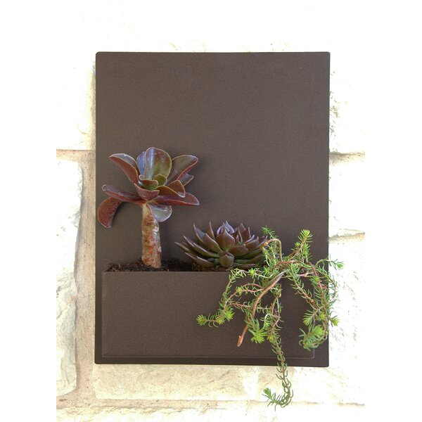 Madness Steel Wall Planter by Urban Mettle
