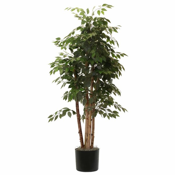 Fir Paper Birch Executive Tree in Pot by Beachcrest Home