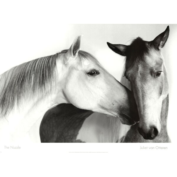 Nuzzle by Van Otteren Photographic Print by Evive Designs