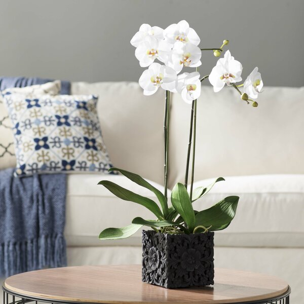 Phalaenopsis Faux Florals Plant by Darby Home Co