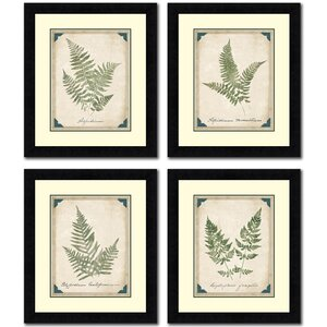 Vintage Ferns 4 Piece Painting Print Set by Tangletown Fine Art