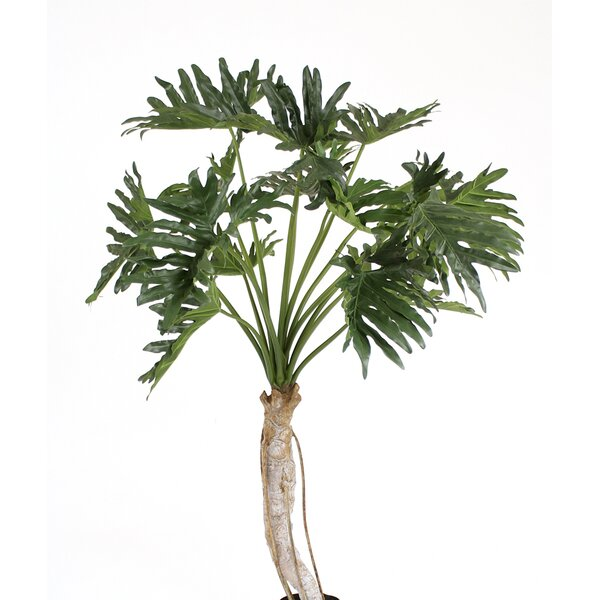 Philodendron Selloum Tree in Planter by Distinctive Designs
