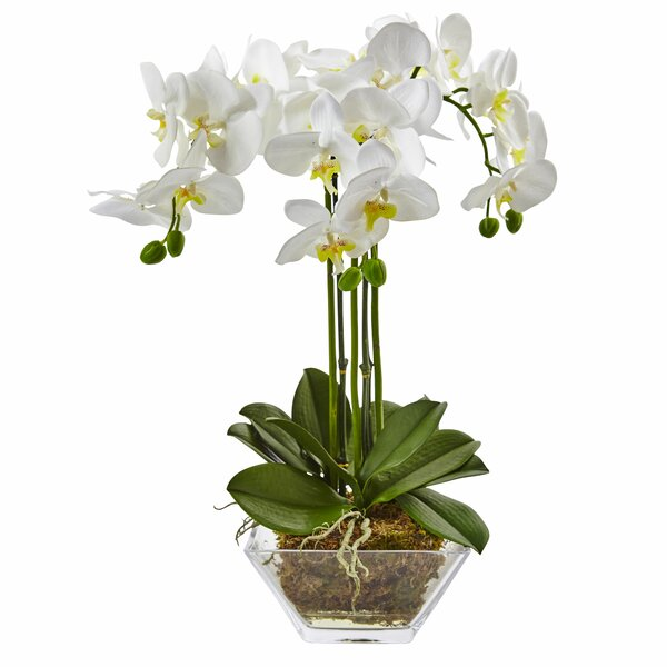Triple Phalaenopsis Orchid Floral Arrangements in Decorative Vase by Nearly Natural