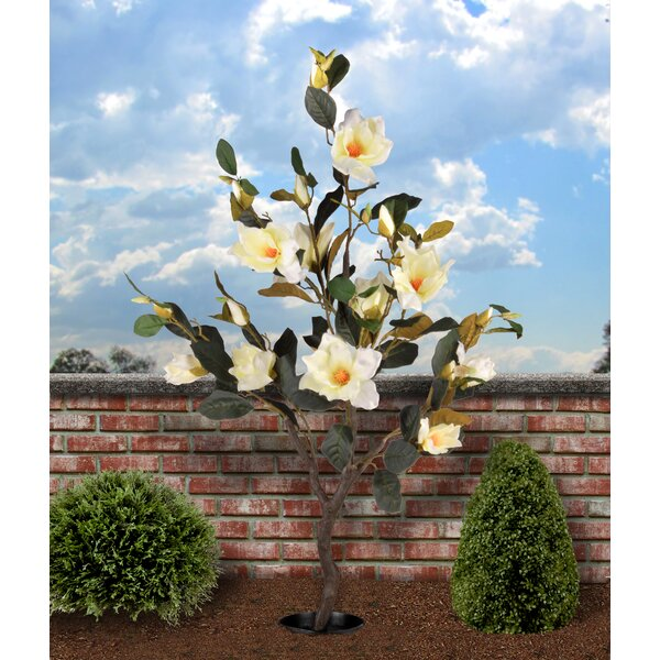 Magnolia Tree in Planter by National Tree Co.