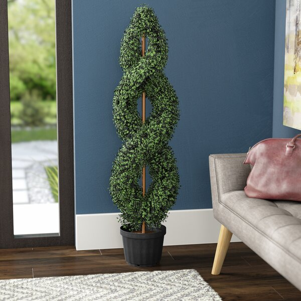 Boxwood Double Spiral Topiary in Pot by Three Posts