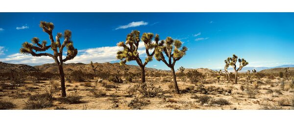 Desert Landscape, Joshua Tree National Park, California, USA by Panoramic Images Photographic Print on Wrapped Canvas by East Urban Home