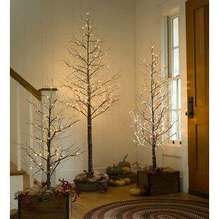 4u0027 Snowy Birch Tree