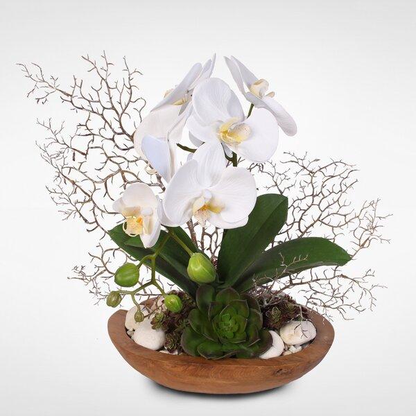 Phalaenopsis Orchids Desktop Floral Arrangement in Planter by Bloomsbury Market